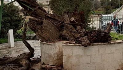 Раскрыта тайна сбывшегося рокового пророчества о конце света — гибели Дуба Авраама (ФОТО)