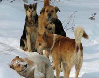 Собаки напали на катавшихся с горки школьников и загрызли одного из них