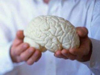 Ученые: интеллектуальные игры бесполезны для мозга