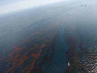 Разлив нефти в Мексиканском заливе может стать глобальной экологической катастрофой