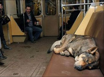 В Москве запретят провоз в транспорте незарегистрированных животных