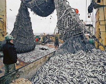Рыба исчезнет из морей и океанов к 2050 году
