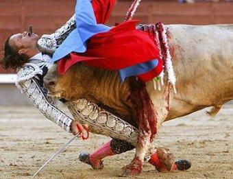 В Мадриде бык поднял матадора на рога, проткнув тому подбородок