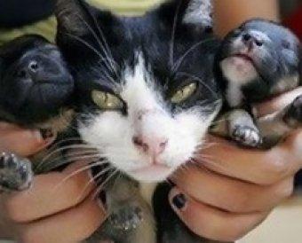 В Грузии кошка родила … щенка