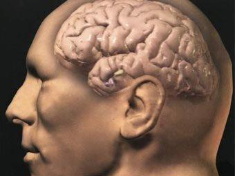 Пик интеллектуальной активности человека приходится на 50-70 лет