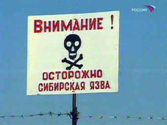В Москву могли привезти мясо, зараженное сибирской язвой