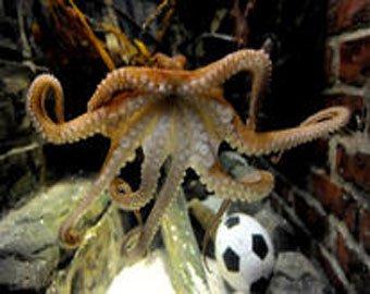 Знаменитый осьминог Пауль умер