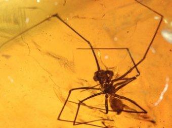 Найдено янтарное кладбище насекомых, живших 50 млн лет назад