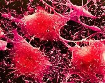 Ученые: рак создали сами люди