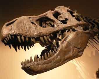 Палеонтологи недооценивали размеры динозавров