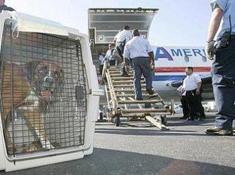 Террористы готовят собак-смертниц для подрывов самолетов
