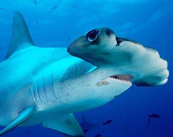 Пьяный серб задом случайно убил акулу в Шарм-эль-Шейхе