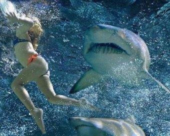 В Египте акулы растерзали трех россиян. Часть пляжей закрыта