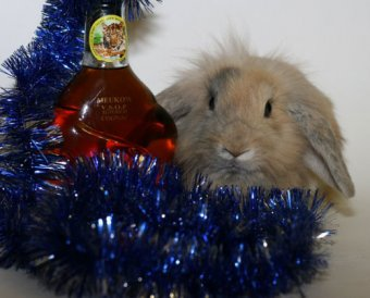 С Новым годом вас, дорогие читатели! С годом стального Кролика!