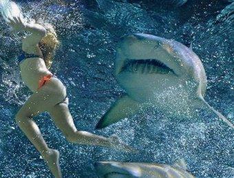 В Египте акула снова растерзала туристку. Хищницу сняли на камеру