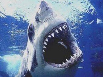 В Египте поймана вторая акула-людоед. Фото жертв попали в прессу