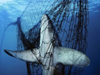 В Шарм-эль-Шейхе установят сети от акул