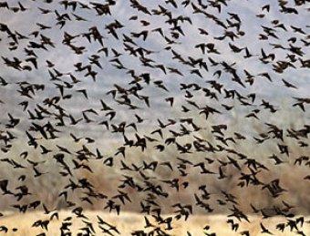"""В Арканзасе на Новый год прошел """"дождь"""" из тысячи мертвых птиц"""
