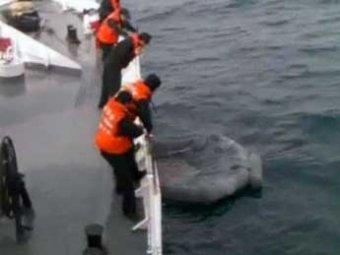 Единственный выживший моряк «Александры» рассказал о причинах крушения