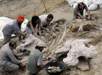 В Анголе найдены останки неизвестного вида динозавра