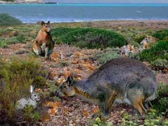В Испании обнаружен гигантский ископаемый кролик