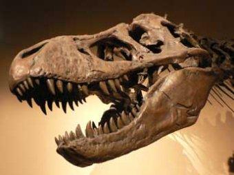 Ученые: кариес мог привести к гибели динозавров