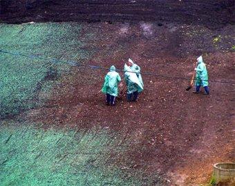 К приезду Путина в Саранске покрасили землю в зеленый цвет