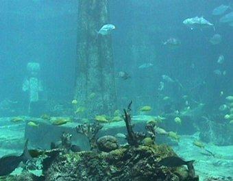 Британские ученые обнаружили под дном океана  легендарную Антлантиду