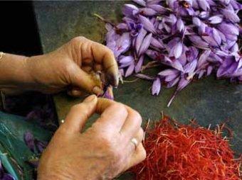 Ученые открыли уникальное лечебное свойство шафрана