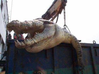 На Филлипинах поймали мега-крокодила весом в 1 тонну