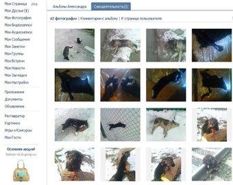 В Киеве поймали живодера, убившего больше 100 собак