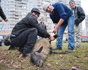 Во Владивостоке на Курбан-Байрам состоялся публичный забой скота