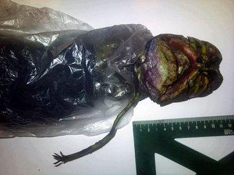 Жительница Петрозаводска два года прятала инопланетянина в холодильнике