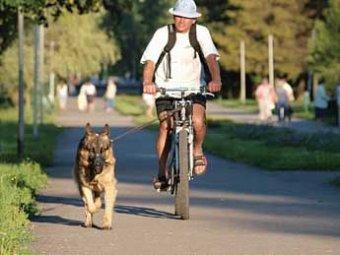 В Мексике собачьи фекалии меняют на минуты в интернете