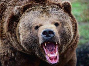 В японском зоопарке медведи растерзали двух девушек