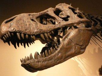 Учёные выяснили новые причины вымирания динозавров