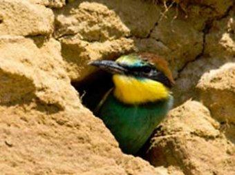 СМИ: турецкие пчеловоды поймали птицу, шпионившую на Израиль