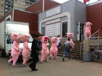 Руководство МВД проверяет питерскую полицию после побоища с «русскими свиньями»