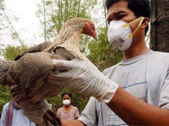 Ученые: птичий грипп может уничтожить человечество