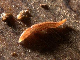 В английской грязи обнаружено уникальное живое существо