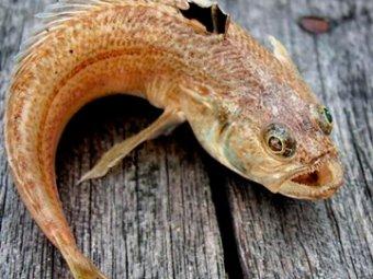 Смертельно опасные рыбы атаковали пляжи Одессы