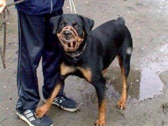 В Питере прохожий-каратист убил вооруженного собачника-уголовника