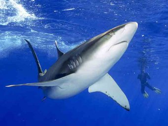 5-летняя девочка искупалась в компании акул