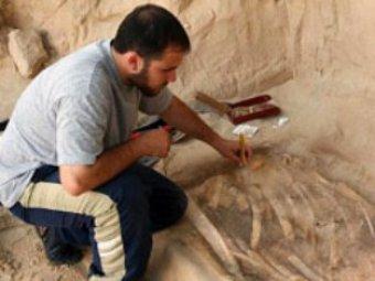 В Египте нашли склад отрубленных рук