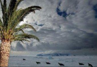 Ученые: глобальное потепление уже было: в Антарктиде нашли пальмы и баобабы