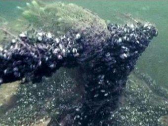 В Чёрном море найден корабль, которому 1300 лет
