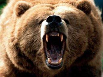 На Аляске медведь насмерть загрыз фотографа