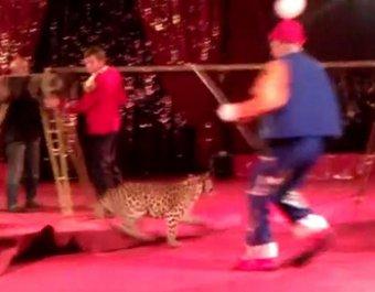Нападение леопарда на ребенка в цирке попало на видео