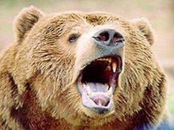 На подмосковной базе отдыха медведь напал на 12-летнюю девочку