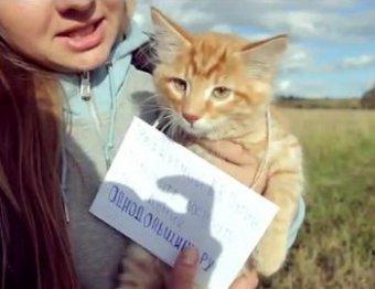 Обманутые дольщики запустили в космос котенка с посланием Путину